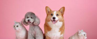 Pet Insurance, Pet Insurance Plans