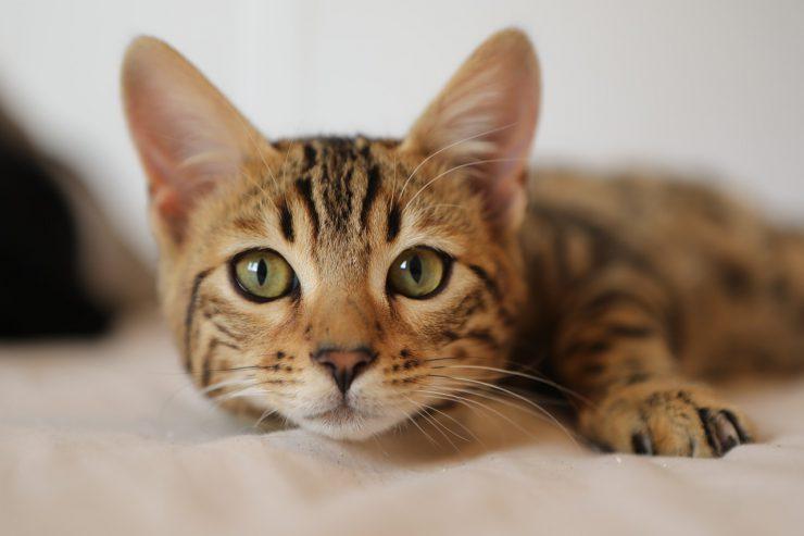 Cat Insurance, Pet Insurance