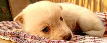 Selecting Insurance for Your Dog